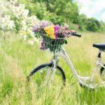 自転車事故対策には、個人賠償責任保険(ポケット保険)がオススメ